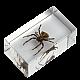 Διαβολική Αράχνη Τ2